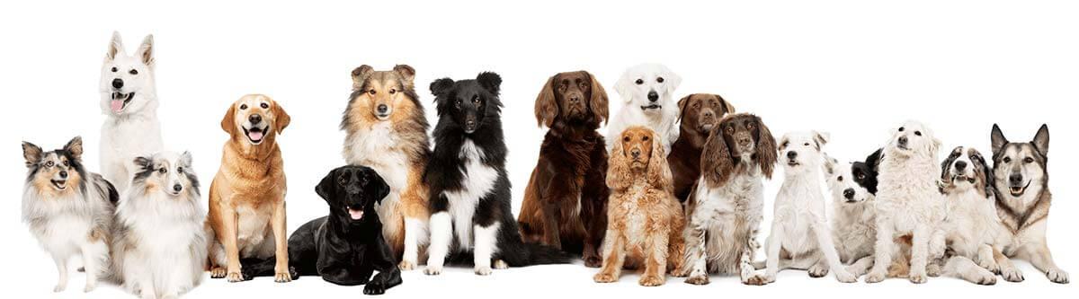 Spaanse hondennamen