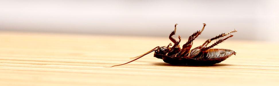 Insecten bestrijden